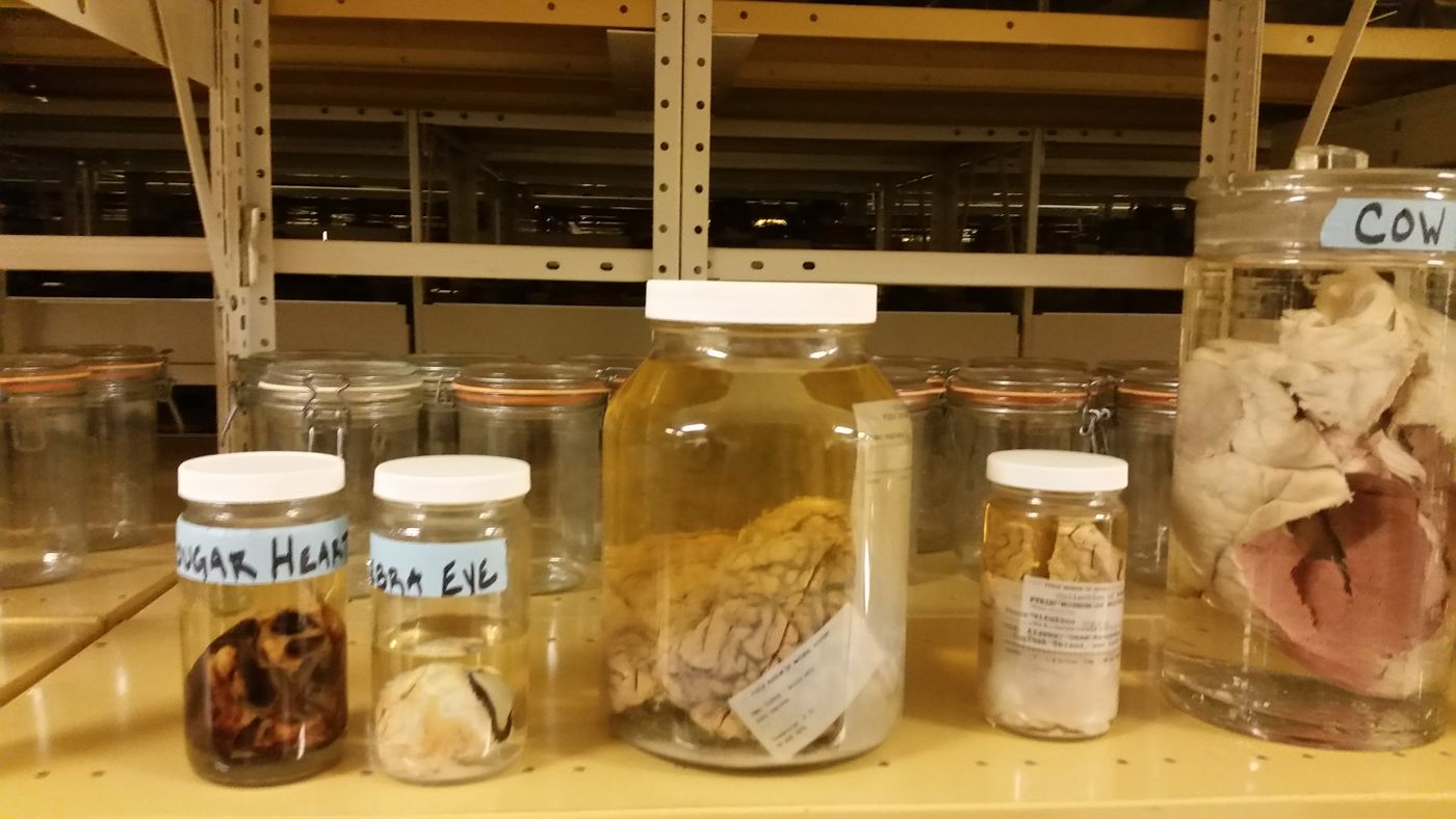 Specimens That Will Haunt Your Dreams | Field Museum