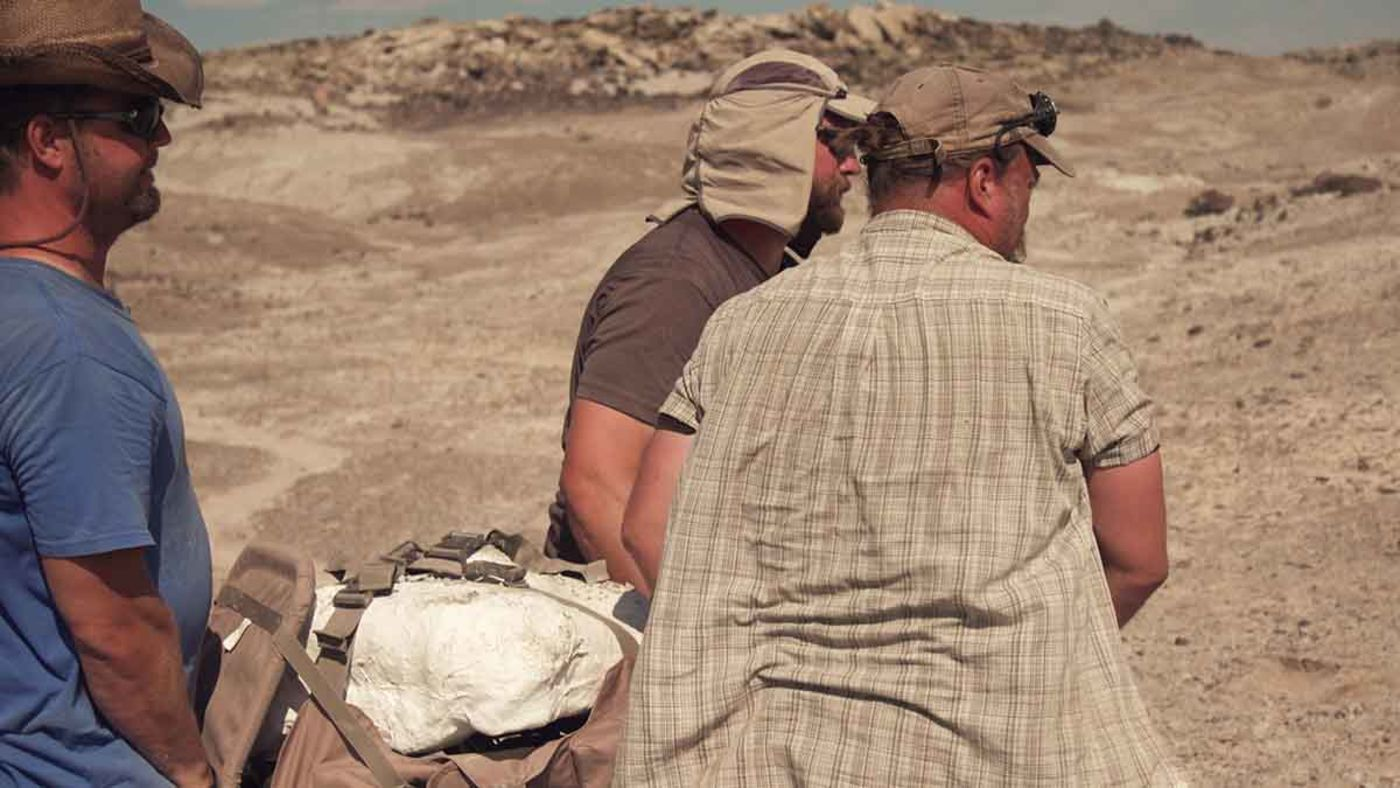 Three people carry a fossil covered in plaster that is buckled onto a makeshift stretcher