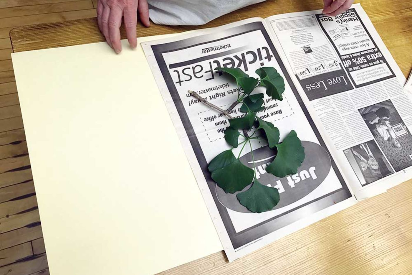 Ginkgo leaves resting on newspaper