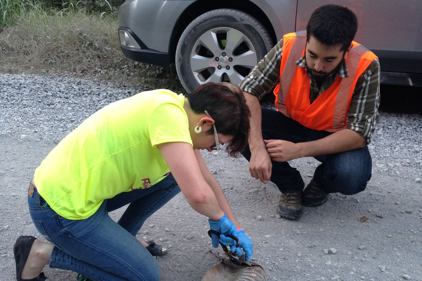Two individuals crouch at the side of the road to examine roadkill. A woman appears on the left, with her gloves hands cutting into the neck of the animal with scissors. A man looks on from the right. He wears a reflective safety vest.