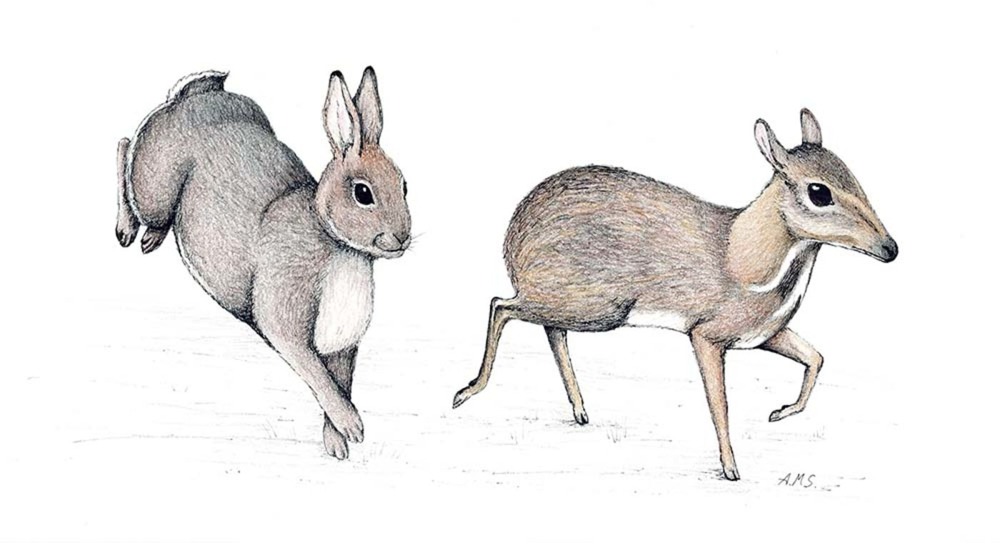 Illustration of a gray rabbit leaping and a small deer-like animal