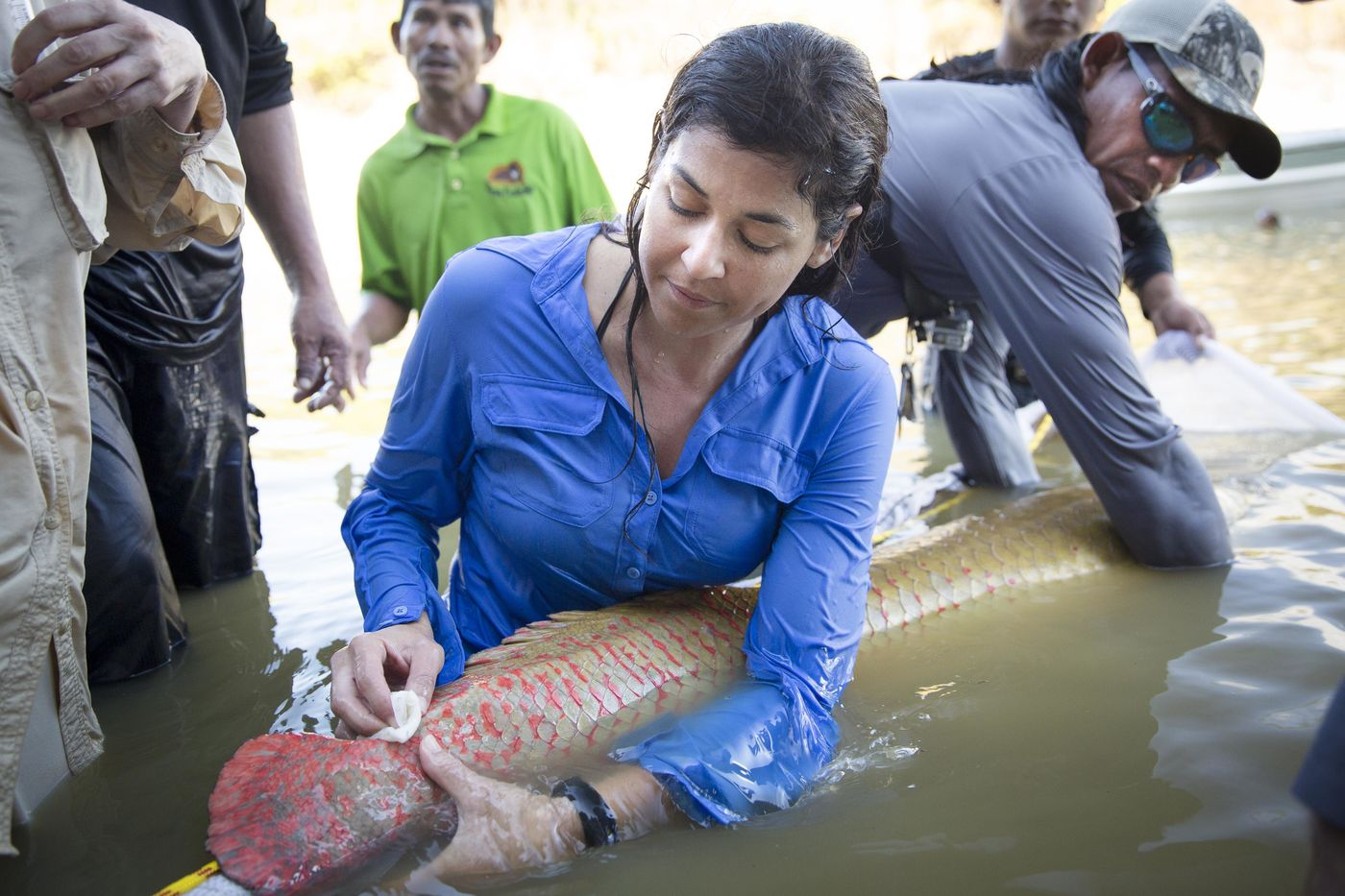 A woman, standing waist deep in water, tags an arapaima, a large freshwater fish. A man helps to hold the fish while several people in the background watch.