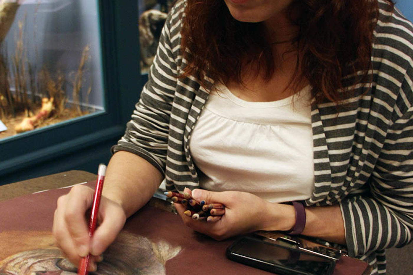 A woman with dark hair and glasses sketching a cougar in a museum gallery, with a specimen of a large cat in the background