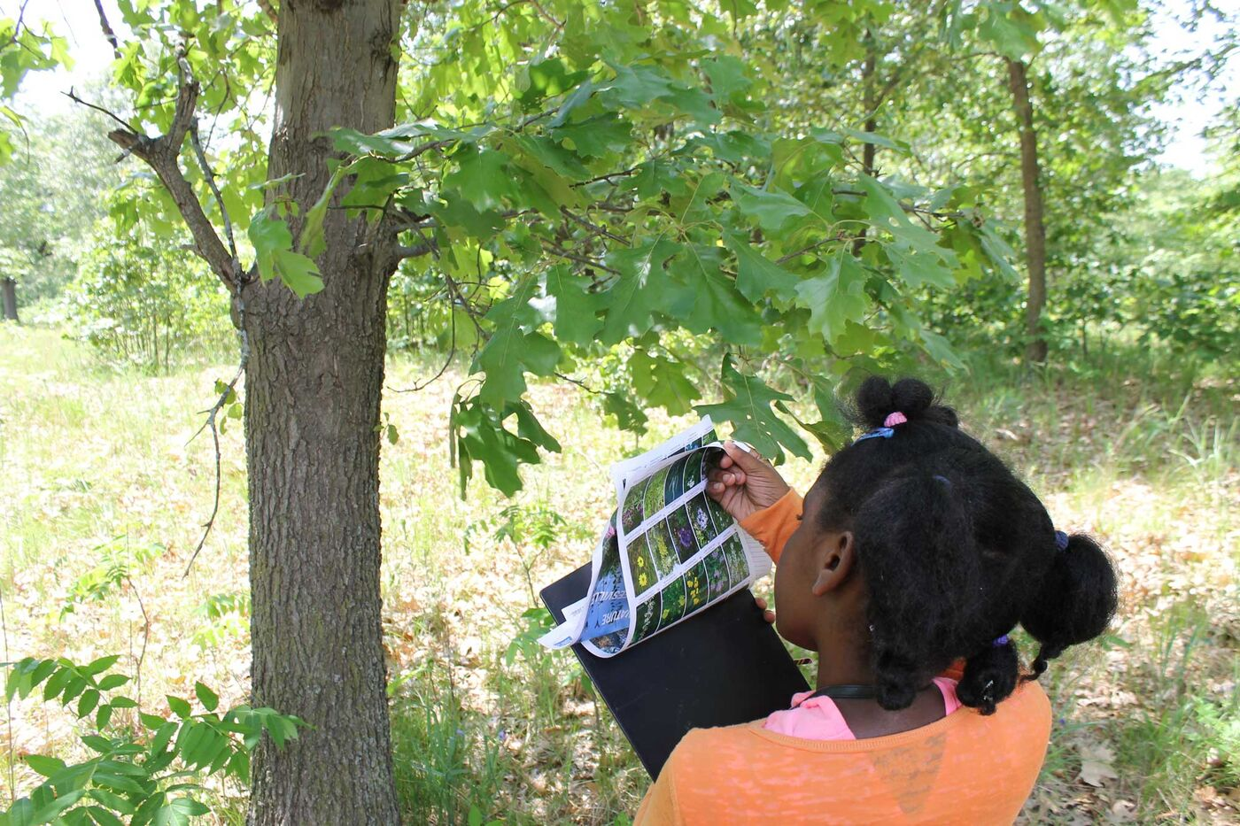 Outside, a young girl flips through pages of plant photos.