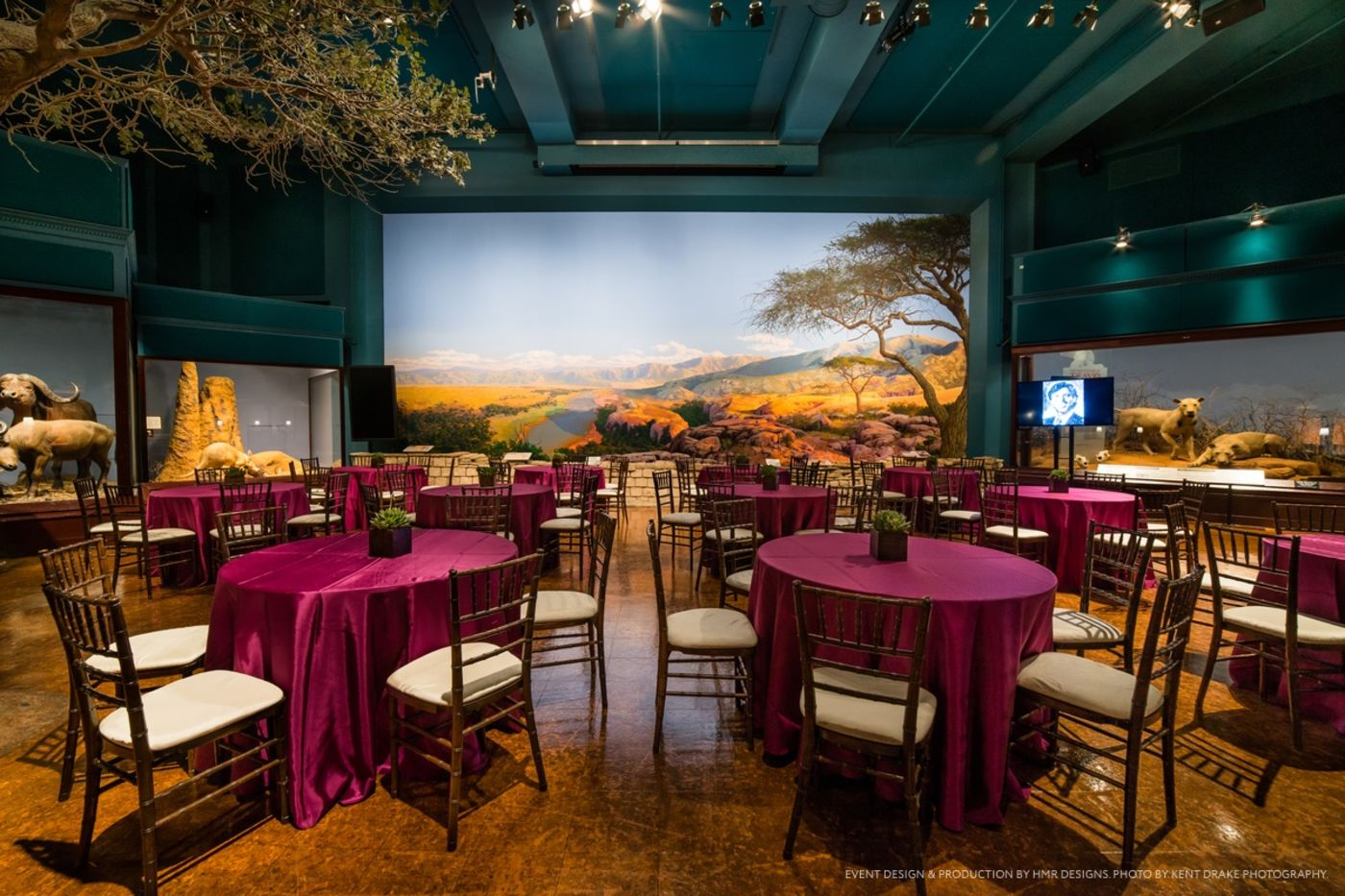 Small circular tables covered by fuchsia tablecloths, each with five chairs set up around them, situated inside Rice Hall. A mural of the Serengeti plains is visible on the back wall, with dioramas on either side.