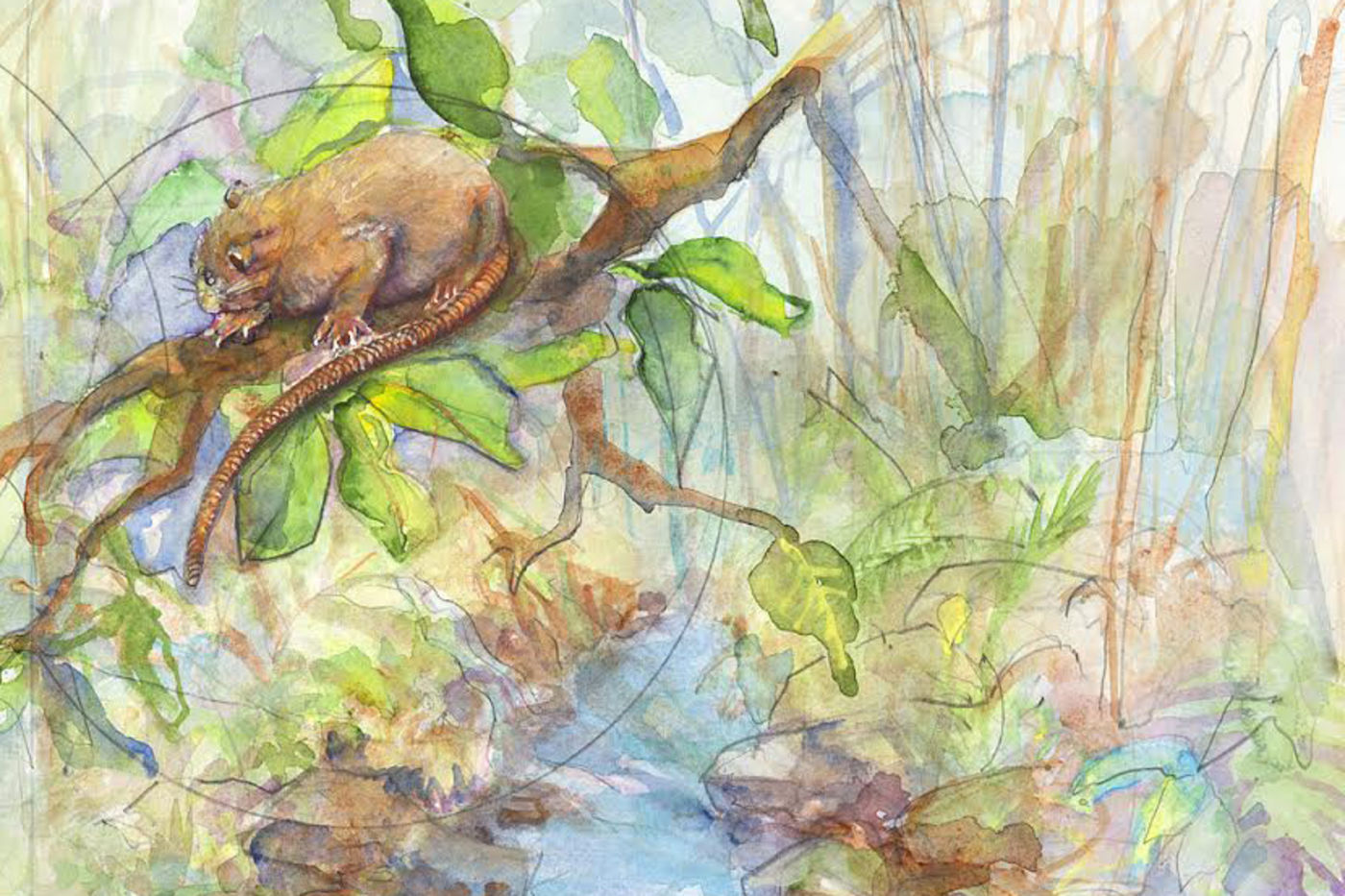 Watercolor painting of a brown rat in a tree, with a river in the background