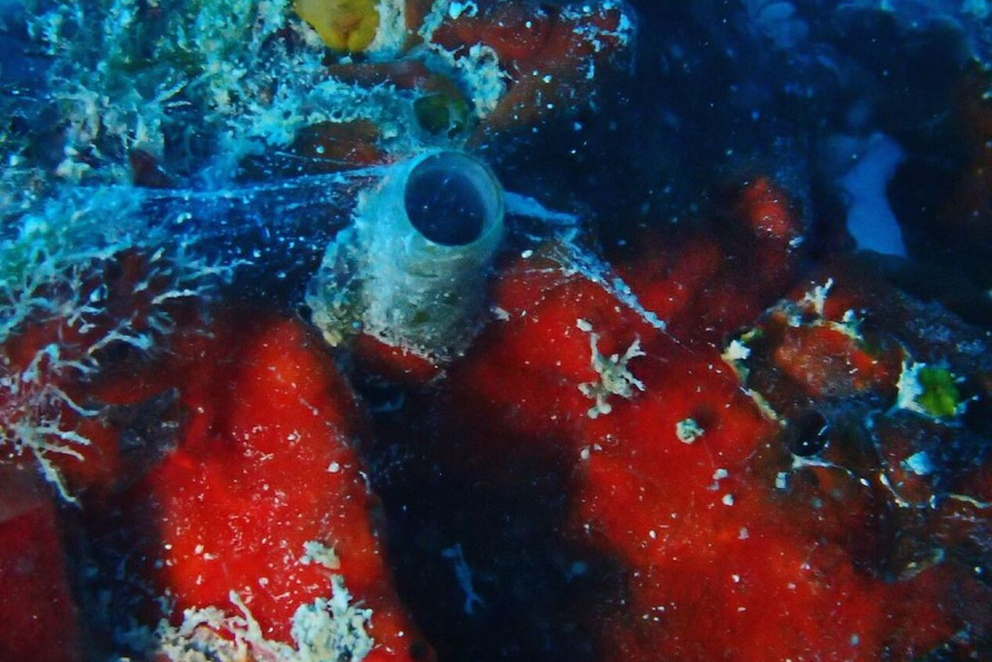 A tube-like structure in the middle of bright red coral, with a web coming out of it