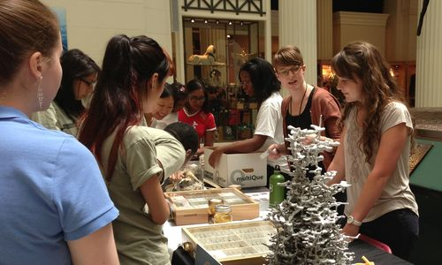 A female staff member talks with a group of female interns, showing them a range of insect specimens.