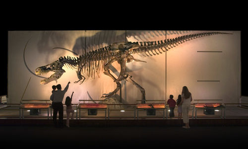 SUE the T.rex fossil skeleton, as seen in the A T. rex named SUE traveling exhibition. SUE is mounted on a stage with Dramatic lighting throwing a spectacular shadow of the skeleton against a graphic backdrop.