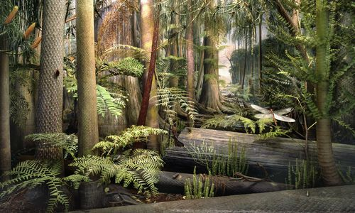 A re-creation of a Pennsylvanian Coal Swamp, with surprisingly tall ferns, horsetails, and lycophytes that dominated tropical Carboniferous forests.
