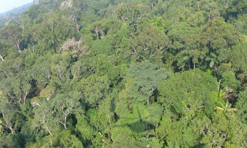 Aerial view of dense green treetops