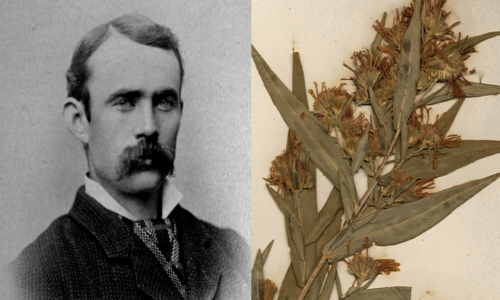 Black and white photo of a man with a mustache, next to a dried plant specimen