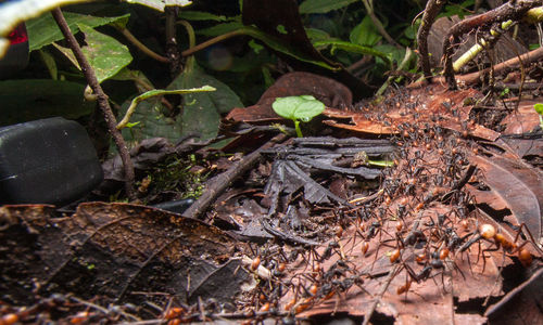 Close-up of ants on the forest floor
