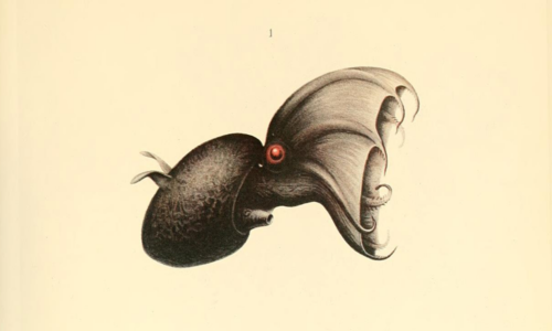 Illustration of a black squid with red eyes