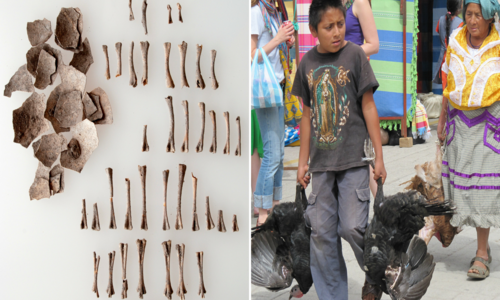 Left: Pieces of eggshell and small bones laid out in rows. Right: A young boy and an older woman carry live turkeys by the feet through a market.