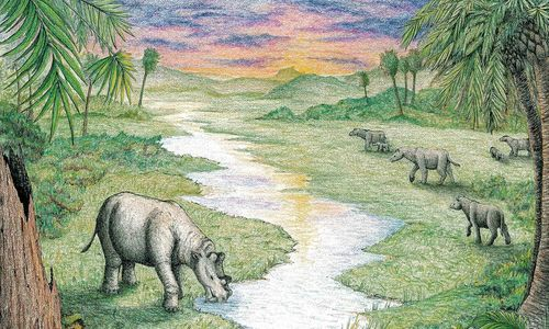 Colorful illustration of a landscape with palm trees, a stream, and rhino-like animals in front of a sunset