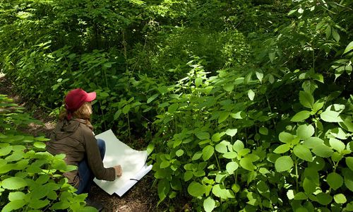 A woman drawing on a large sheet of paper, in a forest of bright green, leafy plants