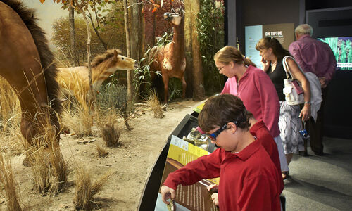 Children and adults standing in front of a horse diorama read museum labels.
