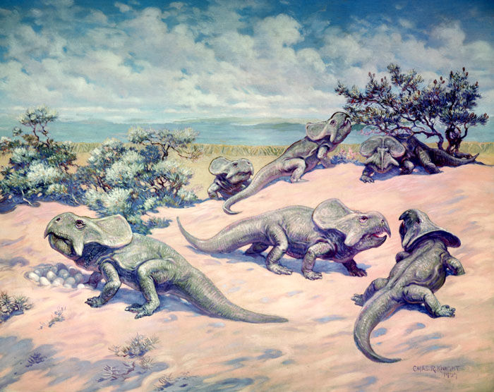 In a 1922 Charles Knight mural, a group of Protoceratops gather on a sandy hill, one watching over a clutch of eggs, while two stand nearby. Another in the background eats leaves from a small tree.