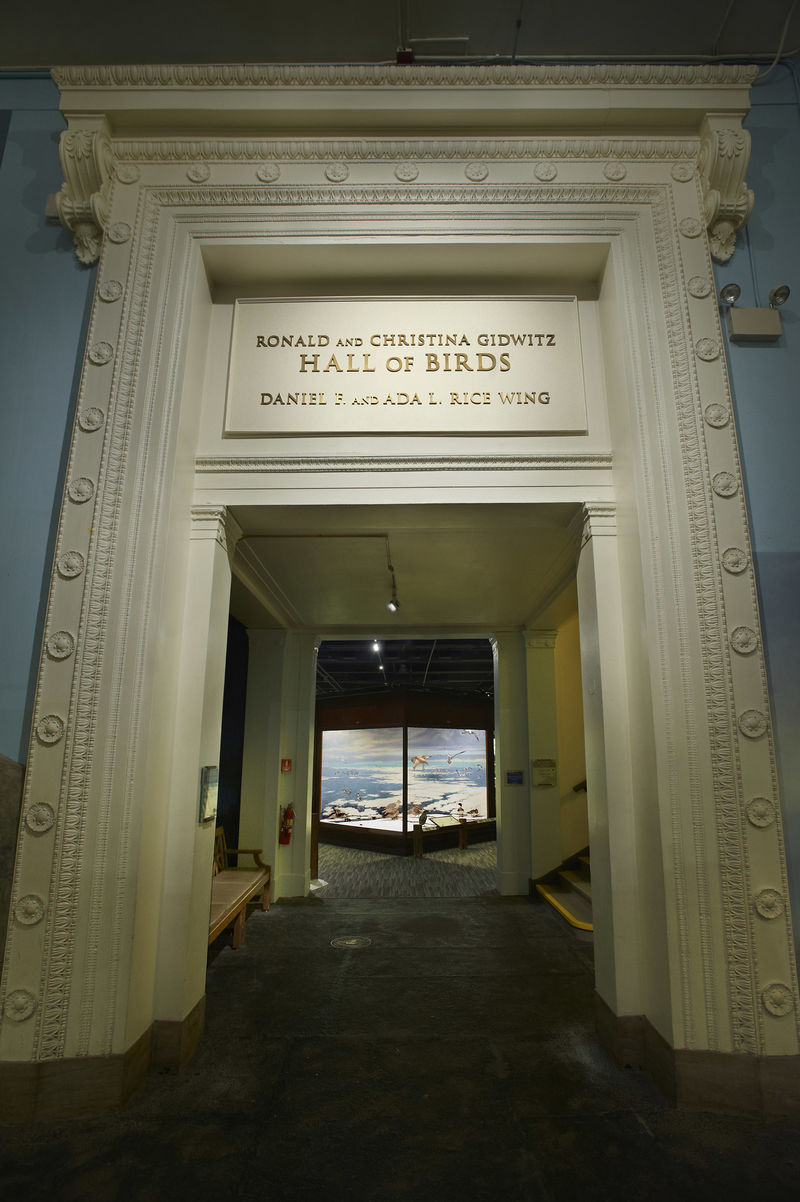 The entrance to the Ronald and Christina Gidwitz Hall of Birds, featuring ornate plaster moulding.
