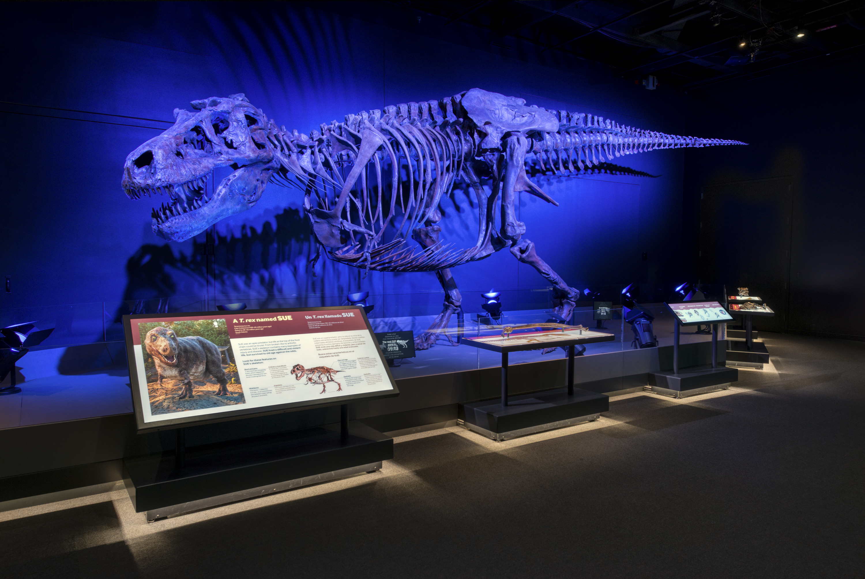 SUE the T. rex fossil skeleton with dramatic blue lighting.
