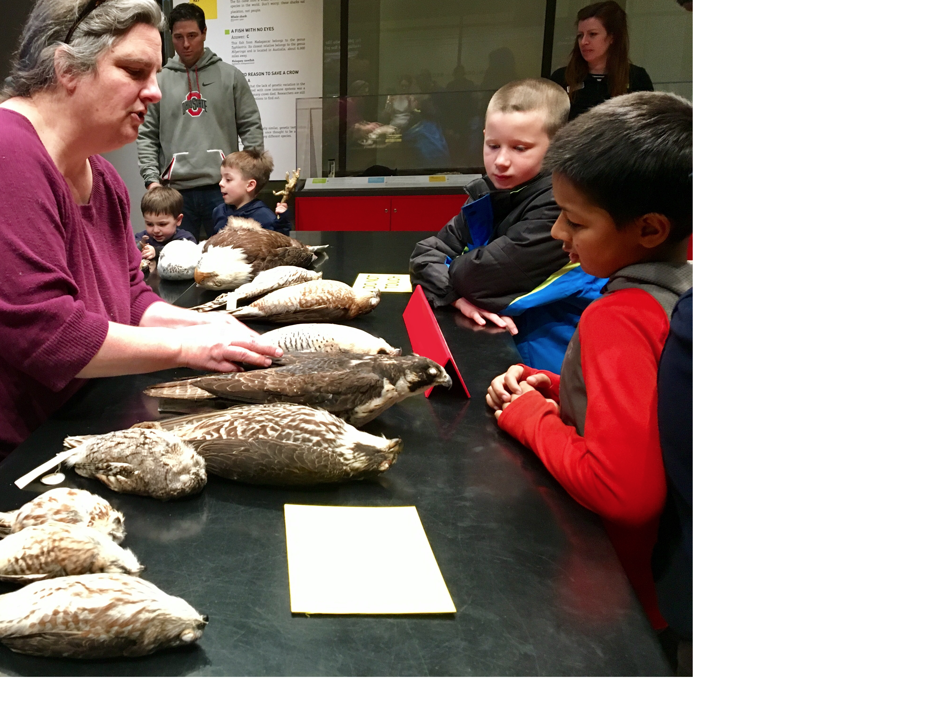 Staff member shows peregrine falcon specimens to two children, while adults look on.
