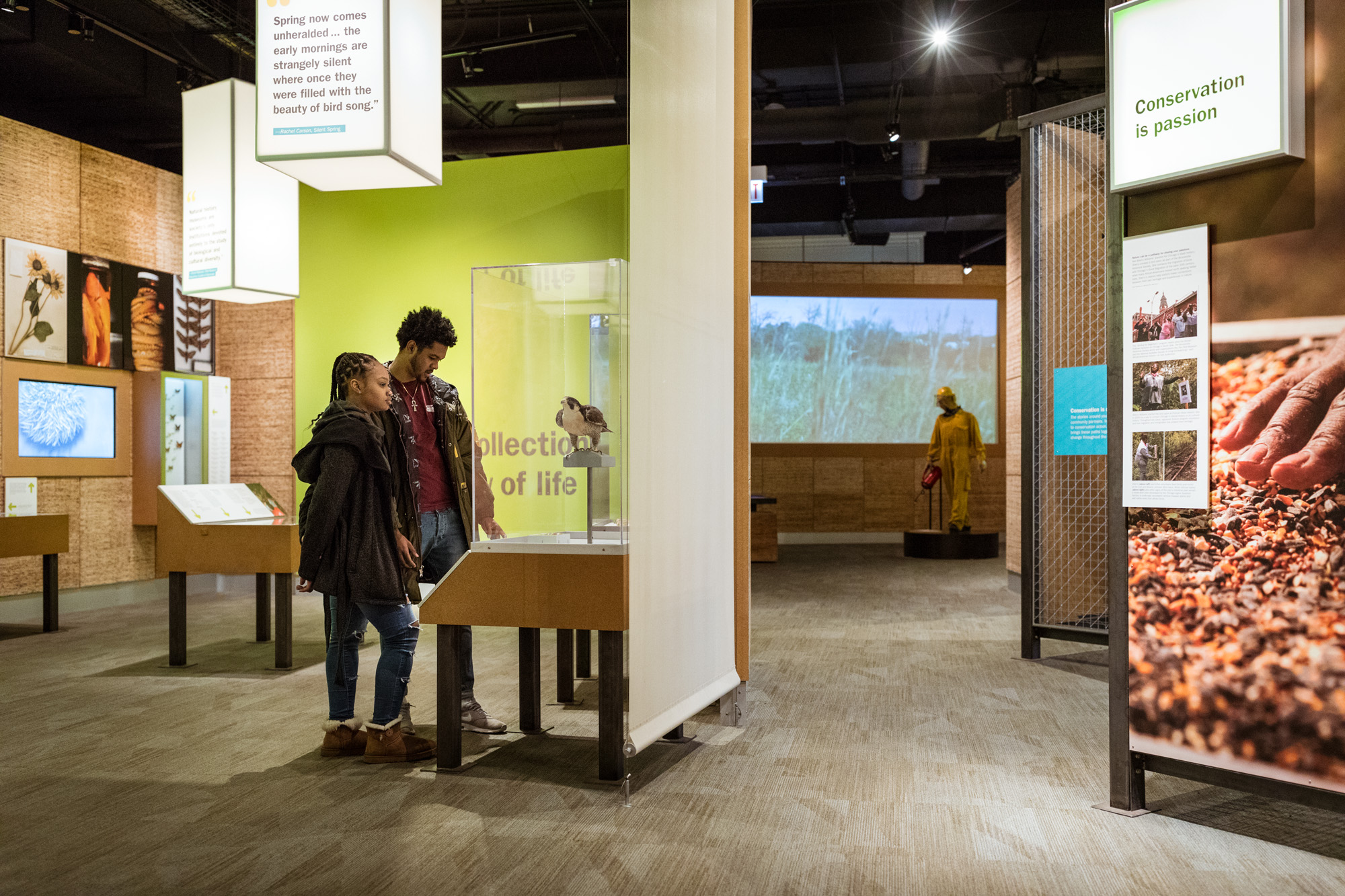 Two people stand in the Restoring Earth exhibition, looking at a peregrine falcon specimen.