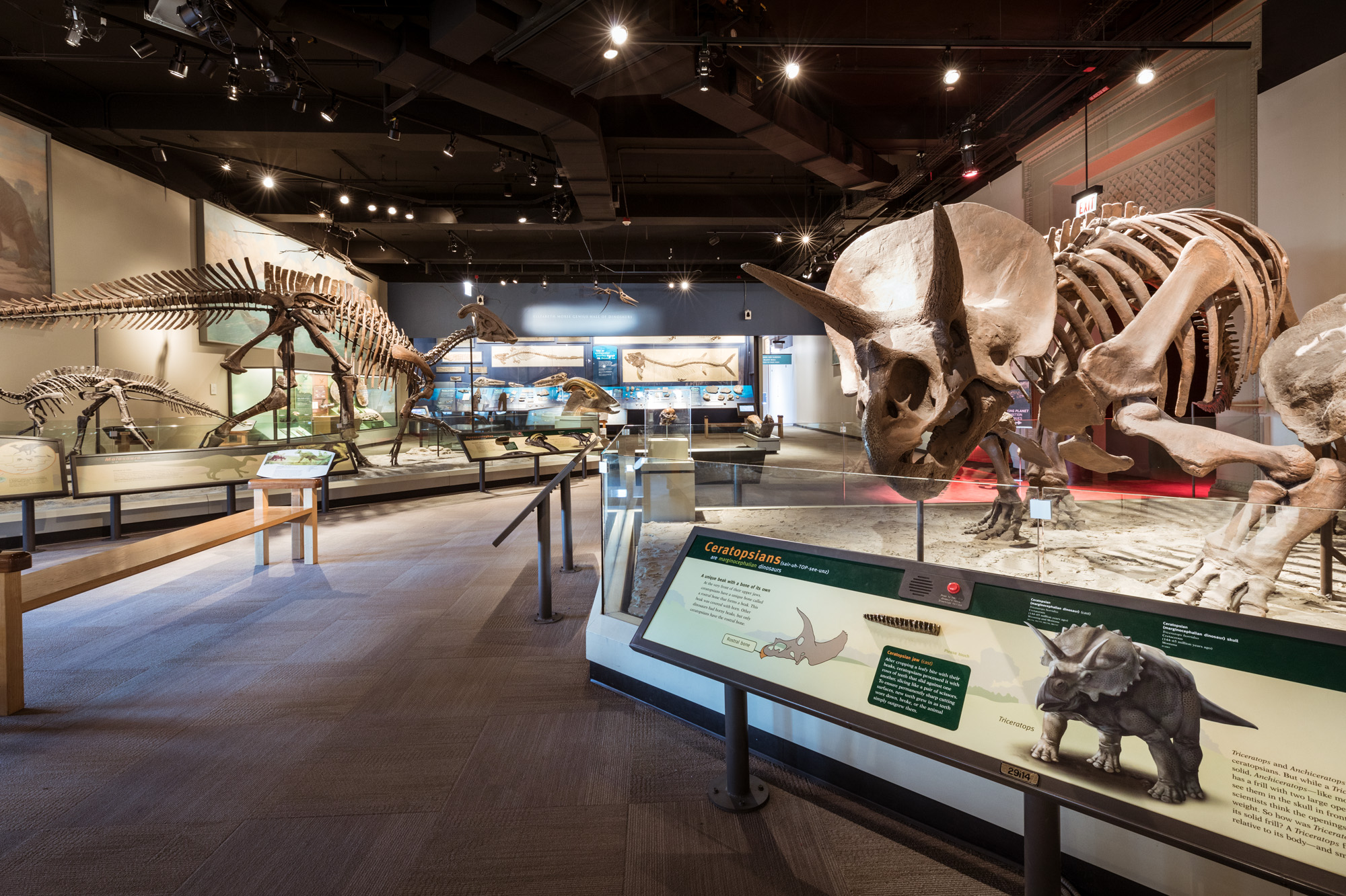 View of the Dinosaur Hall in the Evolving Planet exhibition, with a Triceratops fossil on the right, a Parasaurolophus to the left, and various fossils in the background.