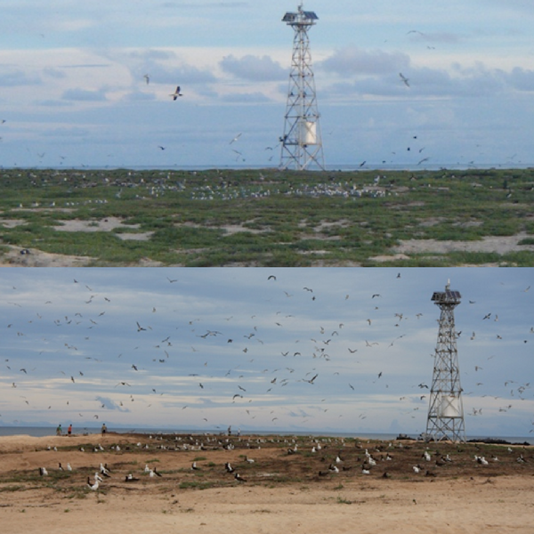 One photo of a landscape with a radio tower, with the ground covered in green plants and seagulls. A second photo of the same landscape, but with no plants and brown dirt.